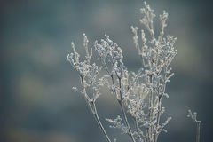 Frozen plants in small crystals of ice. Toned image with soft bokeh Stock Photos