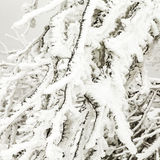 Frozen plants in the snow in front of a blizzard Stock Photo