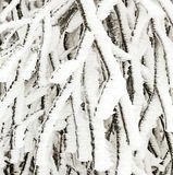Frozen plants in the snow in front of a blizzard Stock Photos