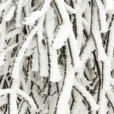 Frozen plants in the snow in front of a blizzard Stock Images