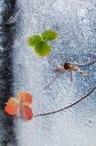 Frozen plants Stock Photography