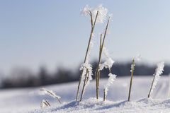 Frozen plants in winter Stock Photos