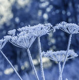 Frozen plants Stock Images