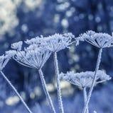 Frozen plants stock images