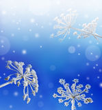 Frozen plants winter background royalty free stock photography