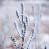 Frozen plants, winter background Stock Image