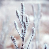 Frozen plants, winter background Stock Images