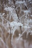 Frozen plants, winter background Royalty Free Stock Images