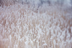 Frozen plants, winter background Royalty Free Stock Photography