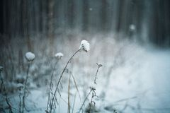 Frozen plants, winter background Royalty Free Stock Photo
