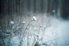 Frozen plants, winter background Royalty Free Stock Photo