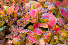 Frozen plants in winter with the hoar-frost Stock Photos