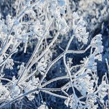 Frozen plants Royalty Free Stock Photo