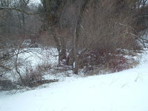 Frozen pnond with trees around it. This is a picture of a pond outside my apartment royalty free stock photography