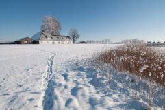 Frozen polder Stock Images