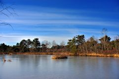 The frozen pond. A landscape view of a nature domain in winter Royalty Free Stock Photography