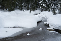 Frozen pond on Mount Seymour snowshoe trail Royalty Free Stock Photos