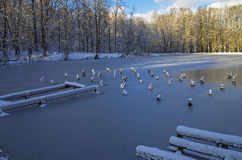 Frozen pond with protruding old piles. Stock Image
