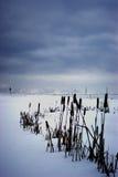Frozen pond Royalty Free Stock Photo