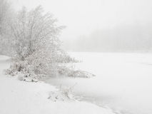 Frozen_pond. A frozen pond with some bushes bathed in even white light during snowfall has a magic a peaceful atmosphere Royalty Free Stock Images