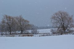 A frozen pond surrounded by willows in a field in a snowstorm in Nova Scotia royalty free stock images