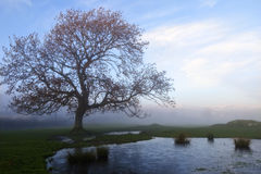 Frozen Pond and Tree on a Misty Winter Evening Stock Photo