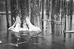 Frozen pond,tree trunks. Royalty Free Stock Photo