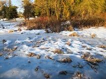 Frozen Pond Stock Image