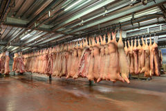 Frozen pork carcasses hanging on hooks in a meat factory Royalty Free Stock Photo