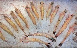 Frozen prawns. In an ice arrangement royalty free stock images