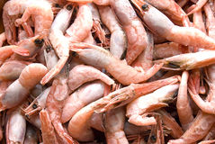 Frozen Prawns Stock Images