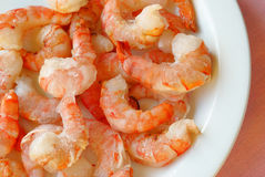 Frozen prawns royalty free stock photography
