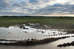 Frozen puddle on agricultural field. Royalty Free Stock Photos
