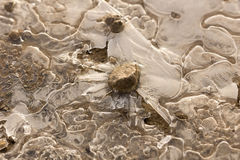 Frozen puddle Stock Photography