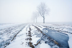 Frozen puddle and misty morning Royalty Free Stock Photo