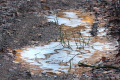 Frozen puddle on the road Royalty Free Stock Photography