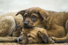 Frozen Puppies Stock Photo