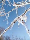 Frozen Rain Branches Stock Image