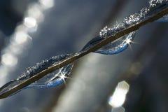Frozen Rain (40) Stock Image