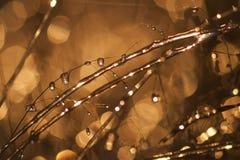 Frozen Rain (28) Royalty Free Stock Photography