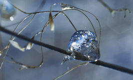 Frozen Rain (39) Royalty Free Stock Photo