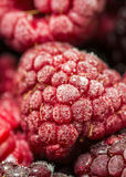 Frozen raspberries Royalty Free Stock Image