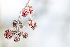 Frozen Raspberries with Ice Crystals Stock Image