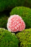 Frozen Raspberry On Green Moss Close-Up Royalty Free Stock Photography