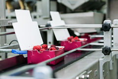 Frozen raspberry processing business Stock Images