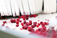 Frozen raspberry processing business Stock Photos