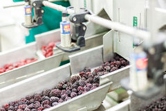 Frozen raspberry processing business Royalty Free Stock Photos