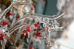Frozen Red Berries Stock Images
