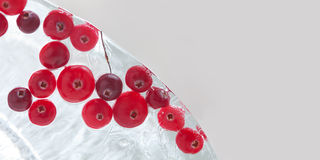 Frozen red berries. Forest cranberry in piece of ice. macro view. copy space Royalty Free Stock Images