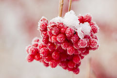 Frozen red berries Stock Photography
